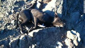 131024171919-woman-rescues-pit-bull-horizontal-gallery